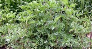 Artemisia: un fantaracconto